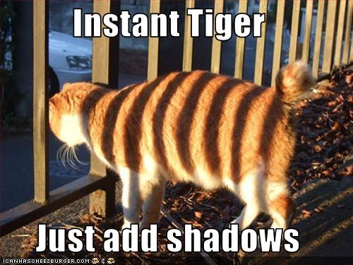 A06funny-pictures-your-cat-has-tiger-stripes