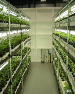 A13potgrowing